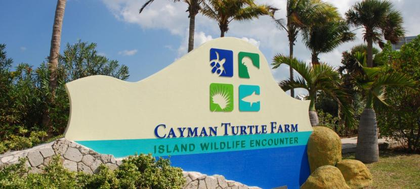 The Cayman Turtle Farm is Abusive and Cruel-Please Help Stop Tourism Animal Abuse