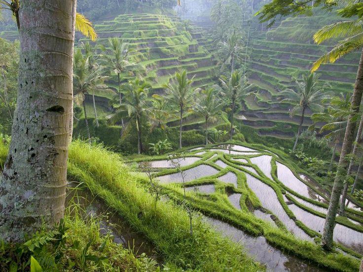 10565c26e49d208f96669d1e21c40bcb--hanging-gardens-ubud-bali