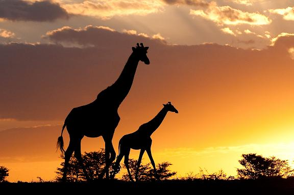 safari-resources1
